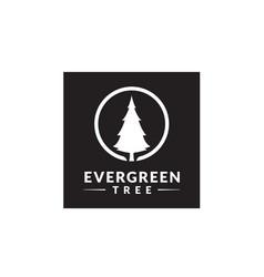 Pine evergreen fir hemlock christmas tree logo vector