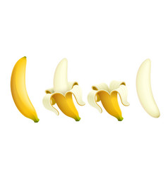 ripe banana set of tropical vector image