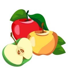 Apple whole and pieces vector image