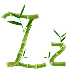 bamboo letter z vector image
