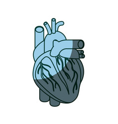 Blue color shading silhouette heart system human vector