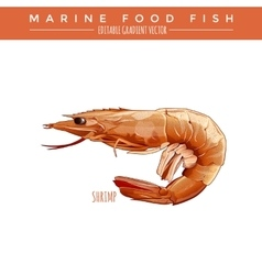Cooked Shrimp Marine Food Fish vector