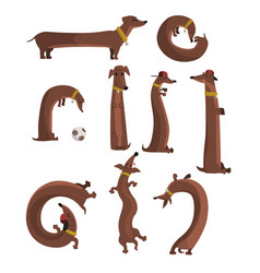 Dachshund dog set cute funny long dog in vector