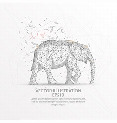 elephant low poly wire frame on white background vector image