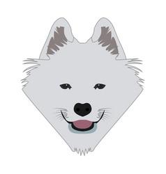 isolated samoyed avatar vector image