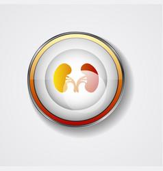 Kidneys symbol vector