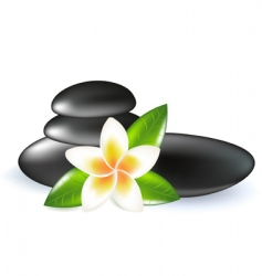 frangipani with leaves and stones vector image