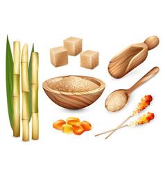 Cane sugar sweets set vector
