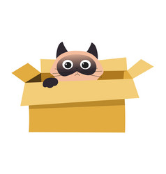 Cat in box hiding or playing isolated animal in vector