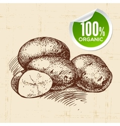 Hand drawn sketch vegetable potato Eco food vector image