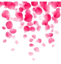 Red Rose Petals Background vector image