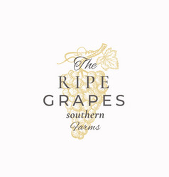ripe grapes abstract sign symbol or vector image