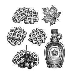 waffles with maple syrup vector image