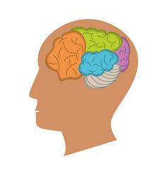 human head brain process icon vector image vector image