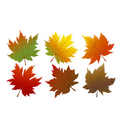 Autumn maple leaves isolated on white background vector