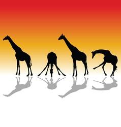 Giraffe four silhouette vector