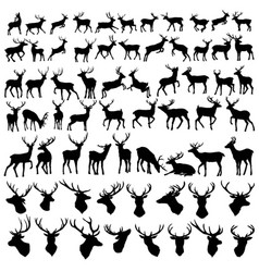 large collection of deer silhouettes vector image