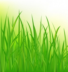 long grass vector image