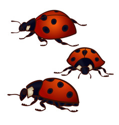 set 3 ladybugs vector image