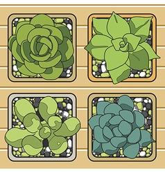 Cactus top view in the pots vector image vector image