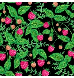 Raspberries seamless pattern with raspberry and vector image vector image