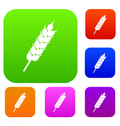 dried wheat ear set color collection vector image vector image