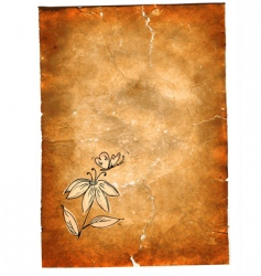 grunge paper vector image vector image