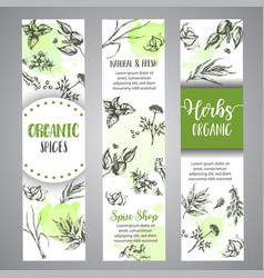 Herbs and spices vertical banners herb plant vector