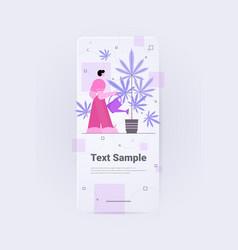 man watering marijuana plant for medicinal vector image
