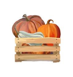 pumpkin box harvesting pumpkins vector image
