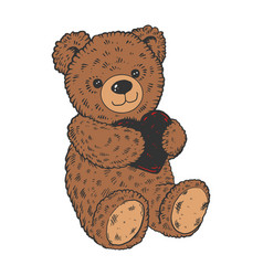Teddy bear color sketch engraving vector