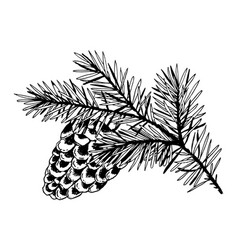 Branch pine with cone engraving vector