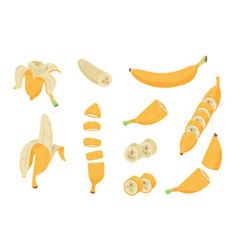 cartoon banana healthy tropical fruit banana vector image