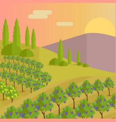 Vineyard plantation grape-bearing vines vector