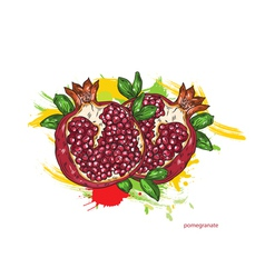 pomegranate with colorful splashes vector image vector image