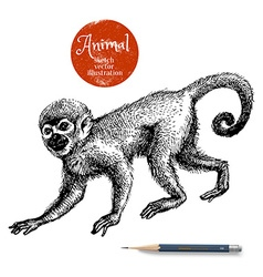 Hand drawn monkey animal Sketch isolated ma vector image vector image