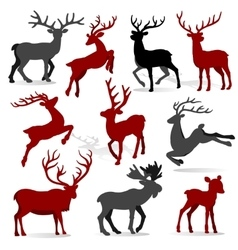 Christmas Collection Reindeer vector image