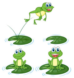 Green frogs jumping on water lily leaves vector