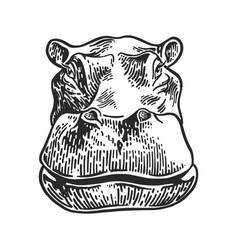 Hippo drawing engraving vector