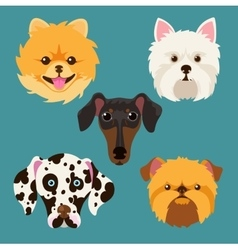 Muzzle different breeds of dogs vector