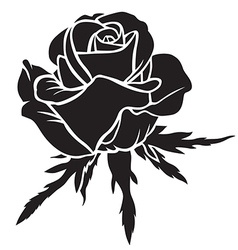 rose bloom vector image
