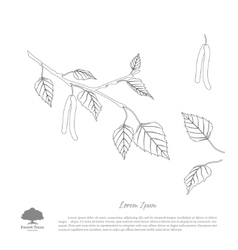 The contour image of birch branches vector image vector image