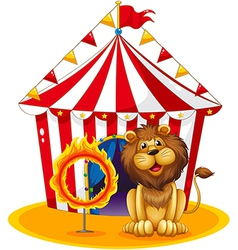a lion beside a fire hoop at circus vector image