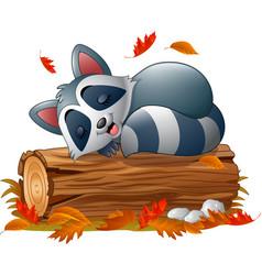 Cartoon raccoon sleeping in the autumn weather vector
