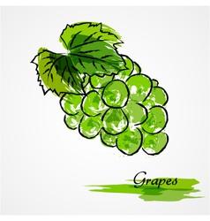 Green grapes vector