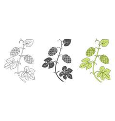 hops plant decoration elements vector image