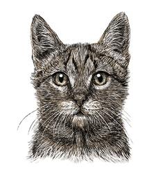 Cat 06 vector