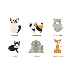 Collection different cats breeds manx persian vector