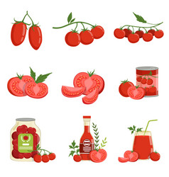 Fresh red healthy tomatoes and tomato products set vector