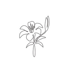 one single line drawing beauty fresh lilium vector image